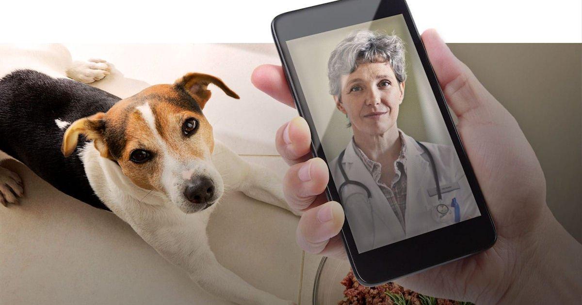 Free Pet Telemedicine Visit